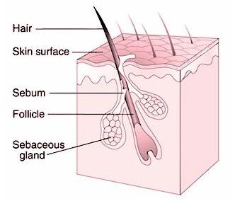 Hair Surgery-Image 1