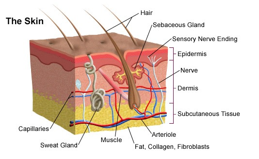 Skin Care banner-Image 1