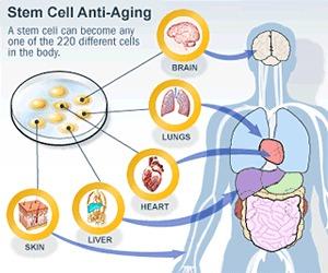 Stem Cell-Image1